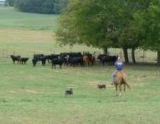 herding-082008