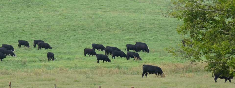 slider-fieldcows